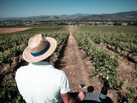 Vive una experiencia con el vino blanco Godelia Godello