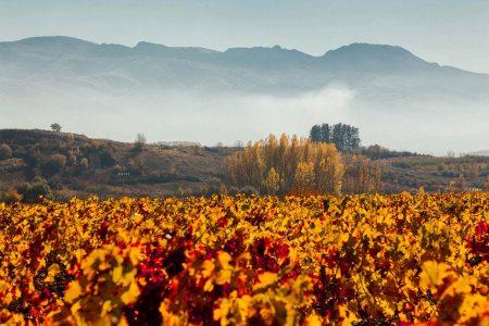 Vista del paisaje desde la viña