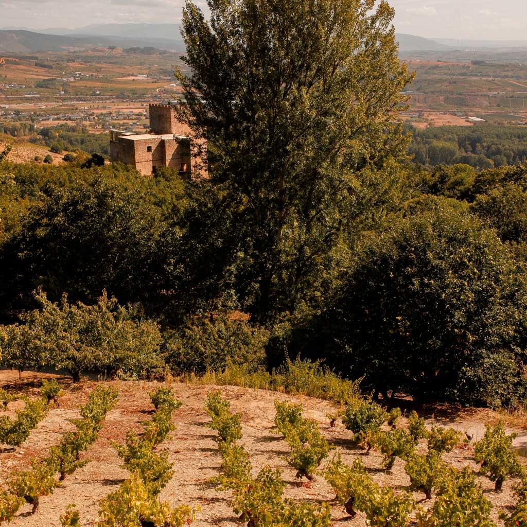 Parcela de viñedo viejo en Corullón
