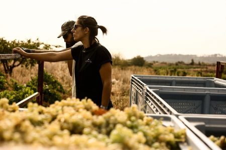 Recogida de la uva para Godelia Godello